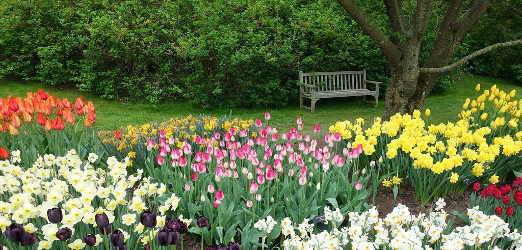 tulips-945826_1920.jpeg