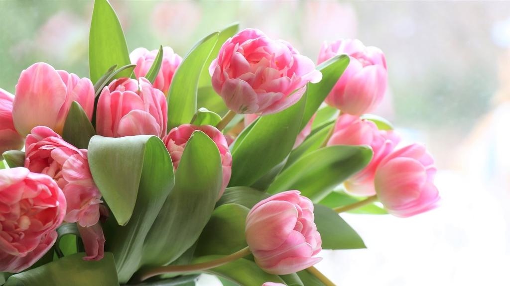 tulips-4026273_1920.jpeg