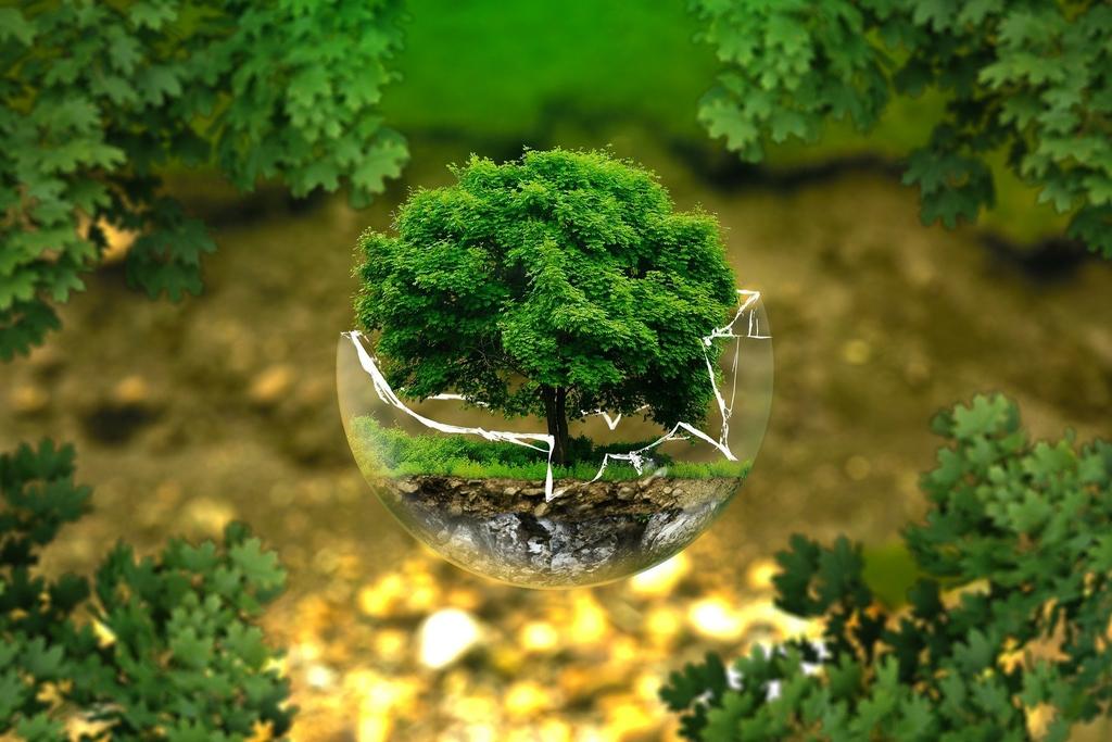 zdjęcie drzewa