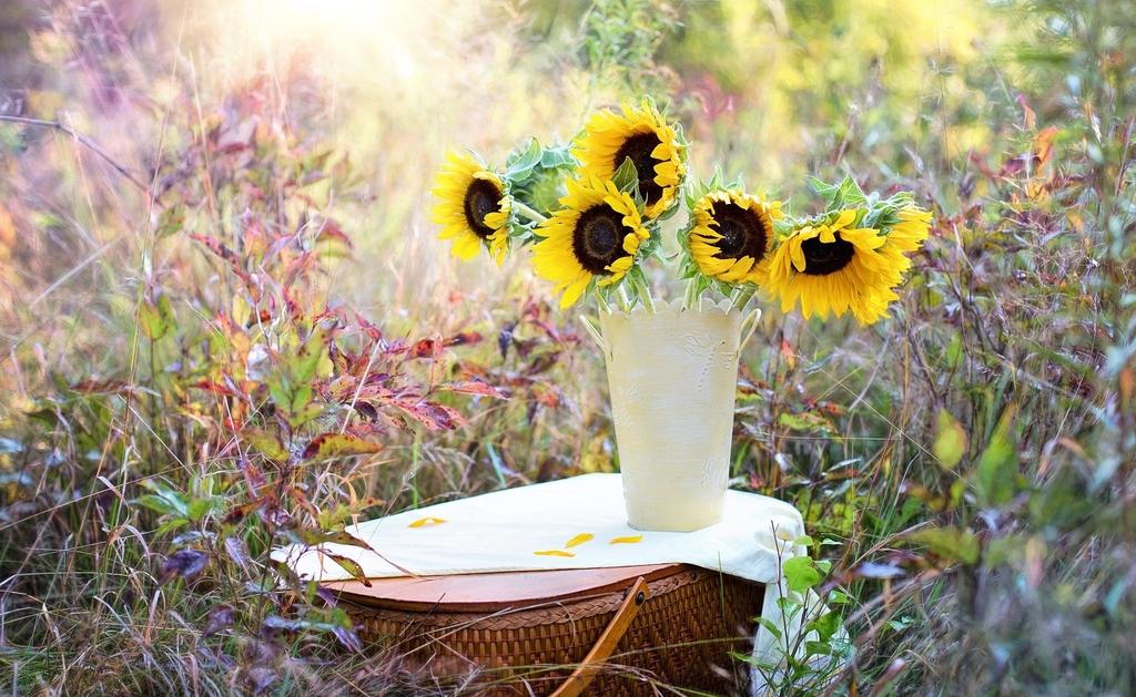 Słoneczniki w wazonie na kwietnej łące