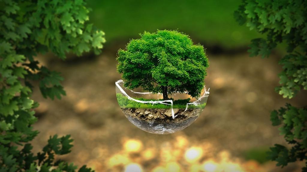 grafika poglądowa - drzewo