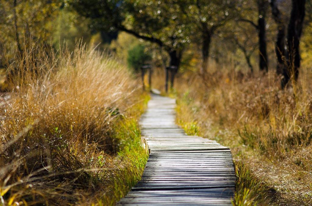 Ścieżka w lesie wyłożona drewnem