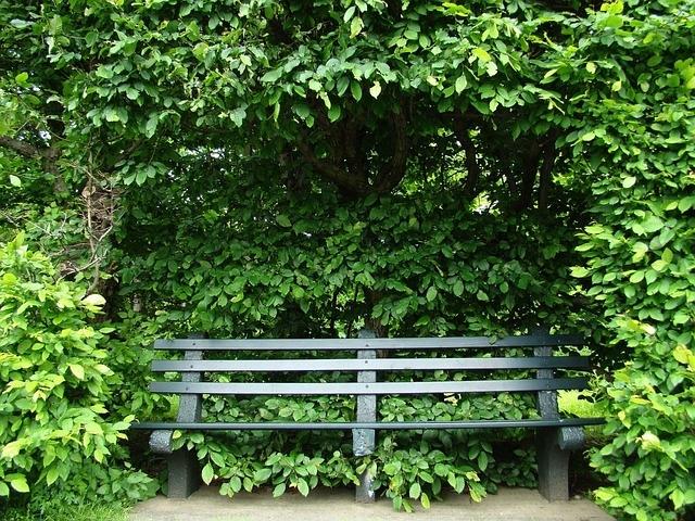zdjęcie ławki ogrodowej otoczonej zielenią