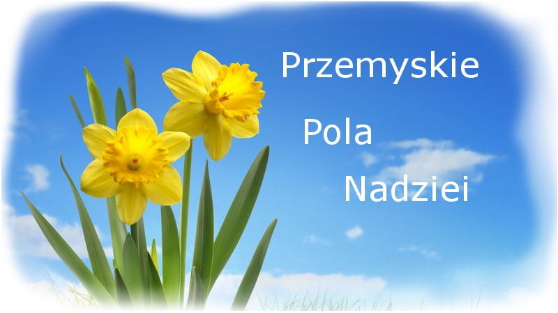 pola_nadziei_wstęp.jpeg