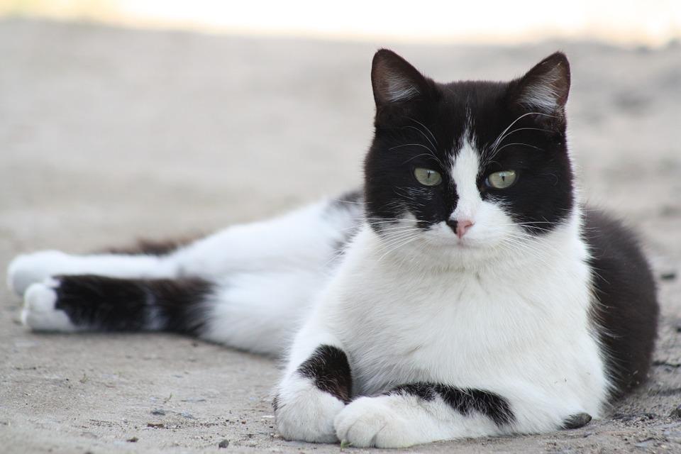 cat-179611_960_720.jpeg