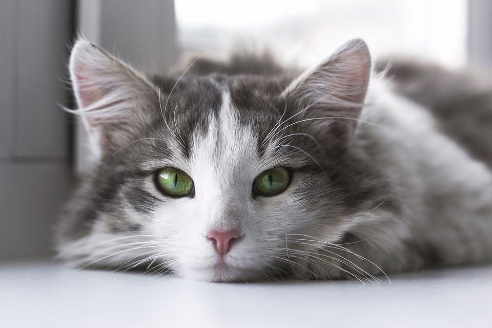 cat-2571971_960_720.jpeg