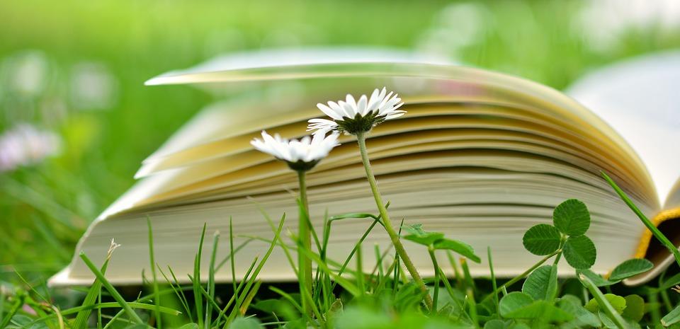 book-2304389_960_720.jpeg