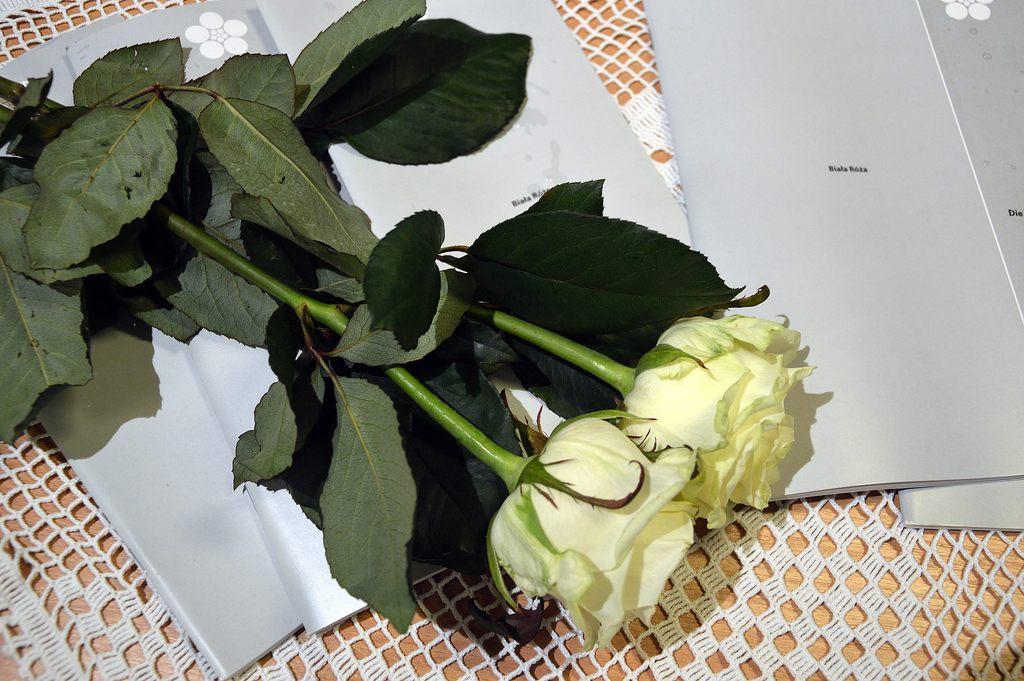 biała_róża_1.jpeg