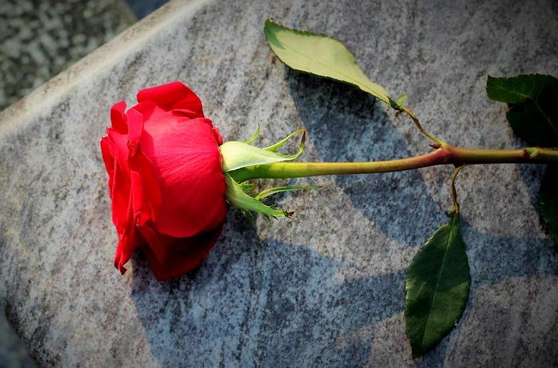 róża.jpeg