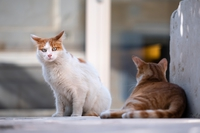 Grafika poglądowa - koty