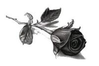 róża w kolorystyce czarno - białej