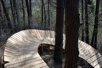 Budowa tras Fort Trails - jeden z elementów drewnianych