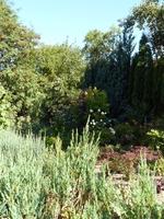 Galeria Konkurs ogrody - wyróżnienie Lipowicka