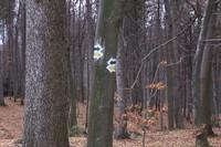 Nad Nienadową zielony szlak przemysko - bachórski przebiega na krótkim odcinku łącznie z żółtym s.jpeg
