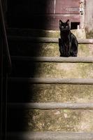cat-1166311_960_720.jpeg