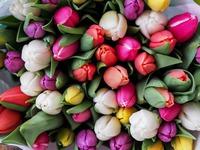 tulips-1246264_960_720.jpeg