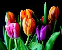 flowers-429041_960_720.jpeg