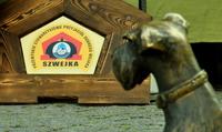 Galeria Święto Miodu i 6. Piknik Organizacji Pozarządowych