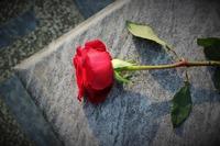 red-rose-4594572_960_720.jpeg